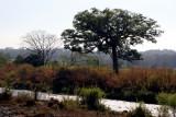 El Rio Madre Vieja Corre Paralelo a la Ruta a la Cabecera