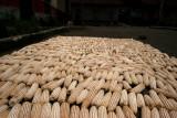 Maiz en Proceso de Secado