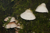 Los Hongos Abundan en la Vegetacion