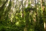 El Bosque en la Parte Baja del Volcan es muy Denso