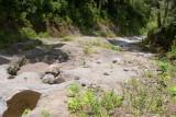 El Camino en Parte Transcurre por un Rio de Ocasion