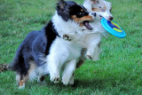 Wild Frisbee Fun