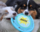 Time for a New Frisbee