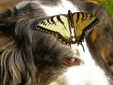 Scout and a Butterfly