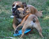 Buddies Sharing