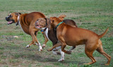 ...As They Round The Corner, The Boxer Is In The Lead
