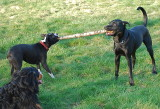 Bark Softly and Carry a Big Stick!