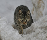 Winter is Hard For Feral Cats