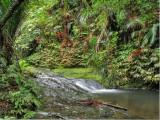 Stream near Fairy Falls