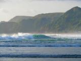 Surfers at Piha