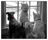 Gang of Three