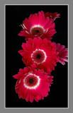 1D9594_frame.jpg
