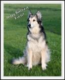Happy Birthday Tanja!
