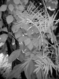 IR Leaves