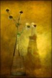 Wild Flowers In Vase.