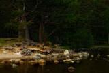 Loch an Eilean.
