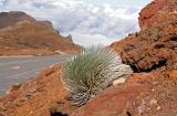 High altitude vegetation