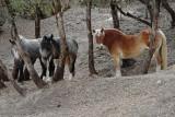Mindy's Draft Horses