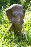 The making of.... straight-tusked elephant