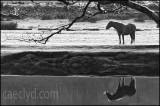 Horse at Maentwrog
