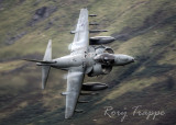 Harrier on Cad West
