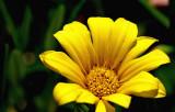 PICT0012_edited-1.jpg
