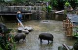 Pigsty, Formosan Aboriginal Culture Village (May-Jun 06)