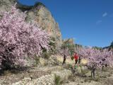 Almond blossom, Bellula Costa Blanca