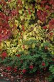 Autumn leaves and fushia
