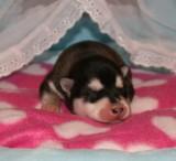 FremontRio Puppies 22109 002.JPG