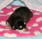HollywoodRio Puppies 22109 021.JPG
