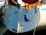 Micia: the sea cat