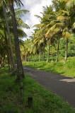 Martinique-001.jpg