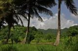 Martinique-003.jpg