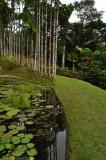 Martinique-005.jpg
