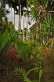 Martinique-015.jpg