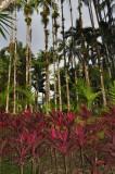 Martinique-020.jpg