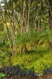 Martinique-029.jpg
