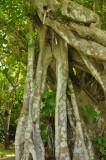 Martinique-041.jpg