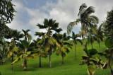 Martinique-051.jpg