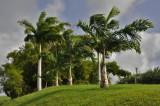 Martinique-055.jpg