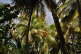 Martinique-060.jpg