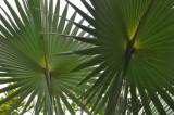 Martinique-061.jpg