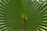 Martinique-065.jpg