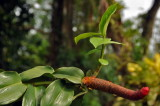Martinique-076.jpg