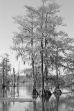 Lake Martin BW Study II.jpg