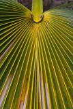 c3110 Loulu, Kauai Palm
