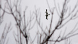 Gull and Branches