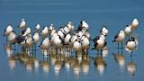 A Bunch of Gulls