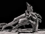 Driftwood Contrast